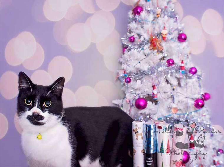 Hythe Kent Photographer pet black and white cat christmas