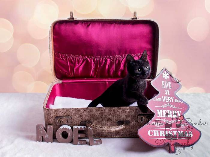 Hythe Kent photographer pet black kitten cat